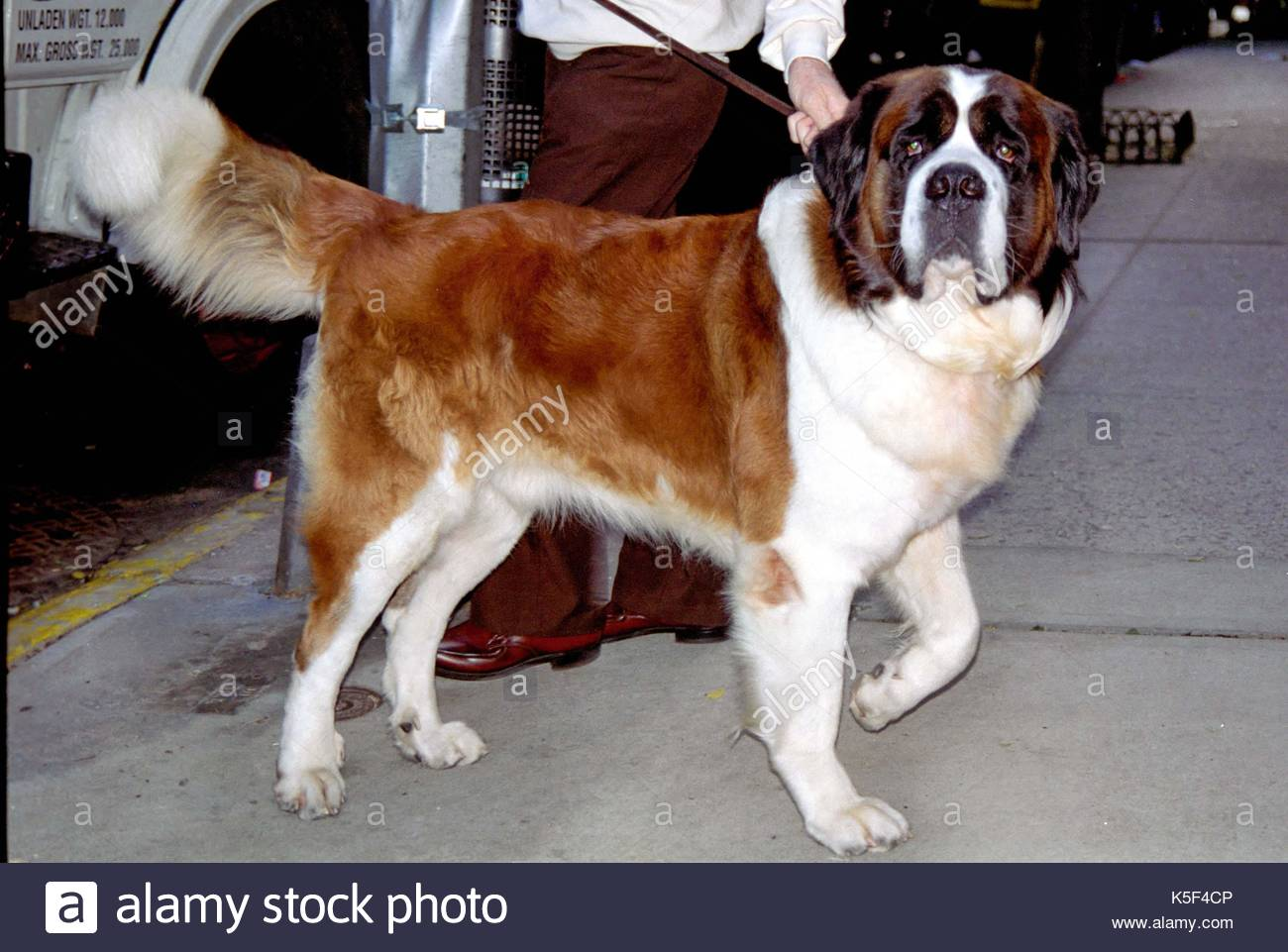 Beethoven Dog Name