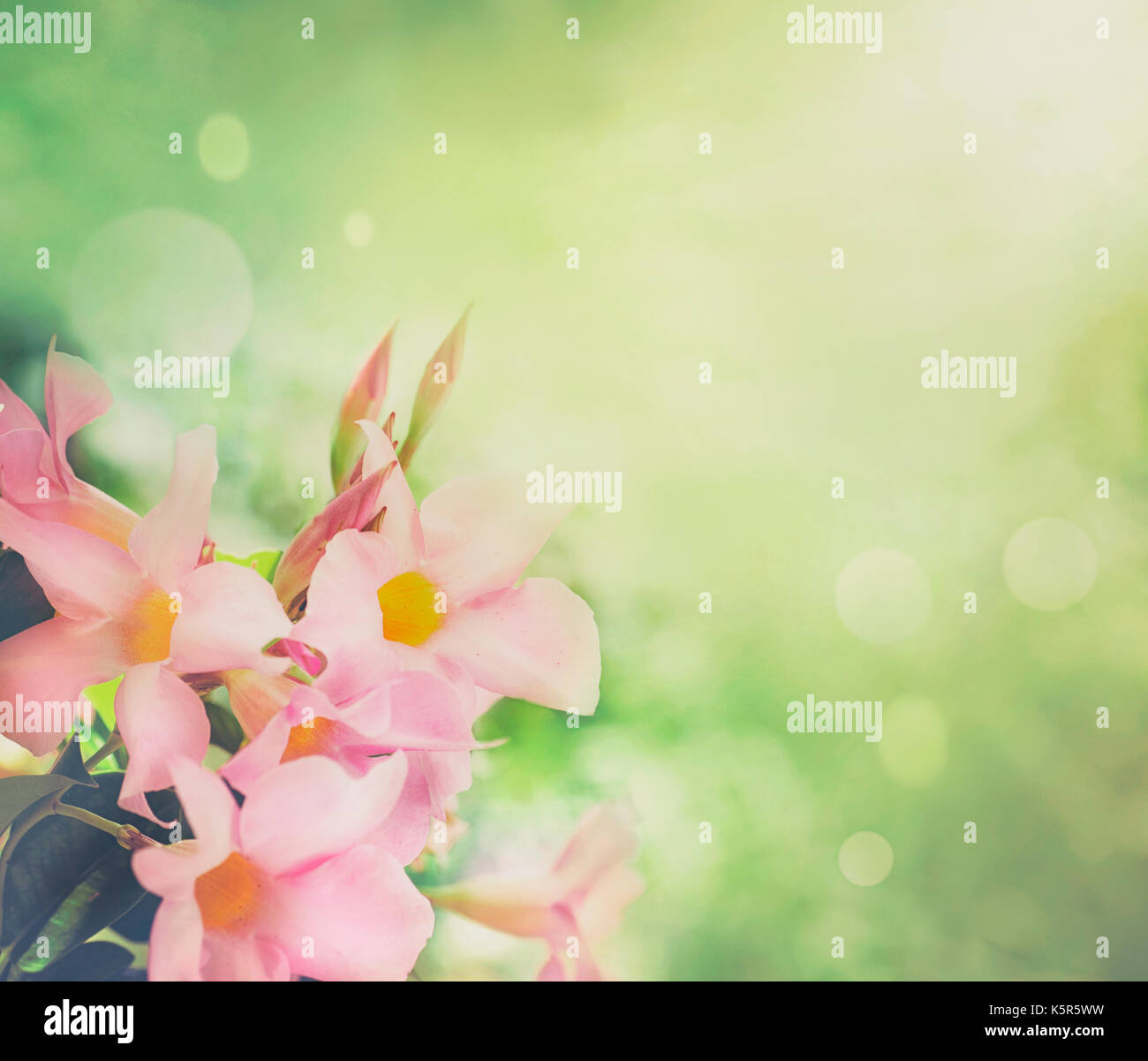Flower Background Spring Flowers Border Design Spring Blossom