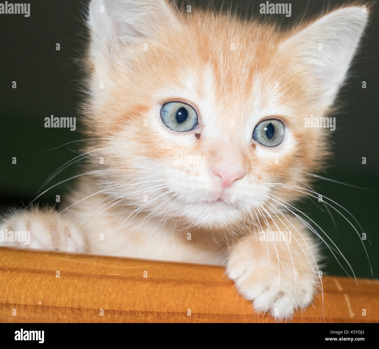 Orange Kitten With Stripes And Blue Eyes