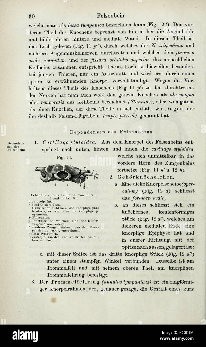 Die Anatomie des Frosches (Page 30) BHL33481463 Stock Photo, Royalty ...
