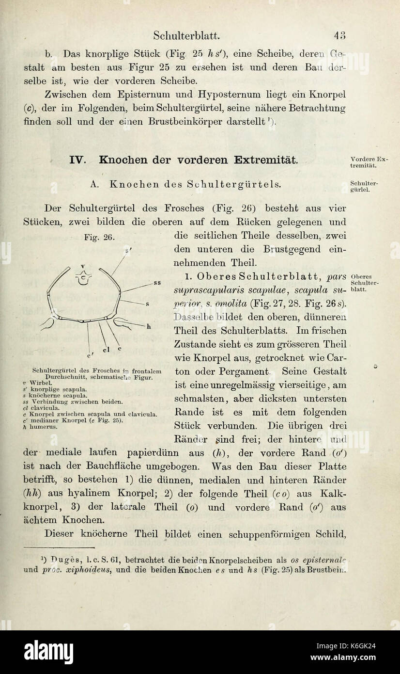 Die Anatomie des Frosches (Page 43) BHL33481476 Stock Photo ...