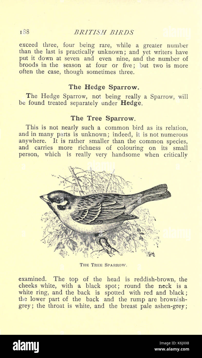 British birds for cages and aviaries (Page 188) BHL17127747 Stock ...