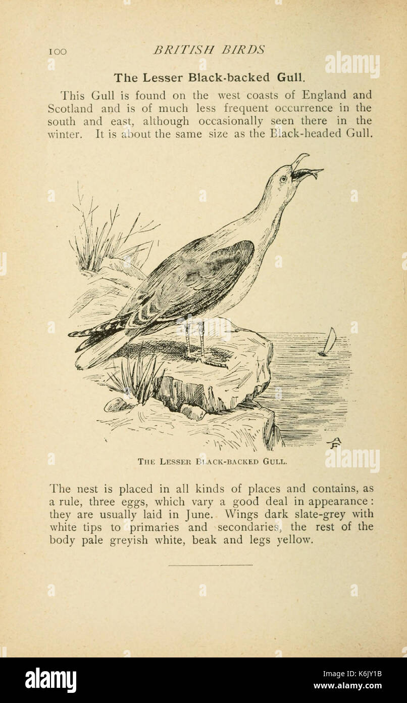 British birds for cages and aviaries (Page 100) BHL9355879 Stock ...