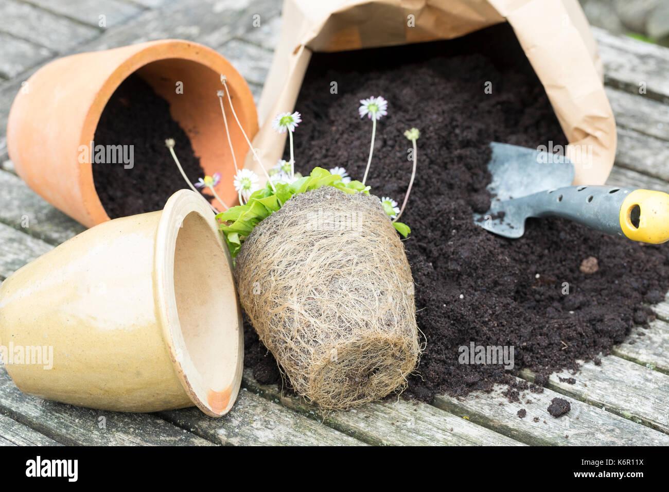 transplanting garden stock photos transplanting garden stock images alamy. Black Bedroom Furniture Sets. Home Design Ideas