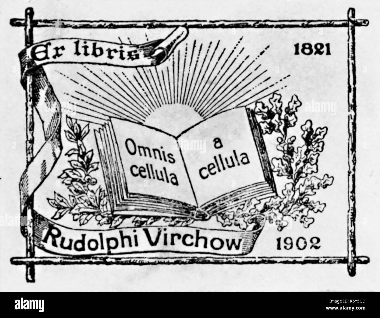 Rudolf virchow black and white stock photos & images alamy what did rudolf virchow do rudolph virchow cell theory cell theory reading worksheet