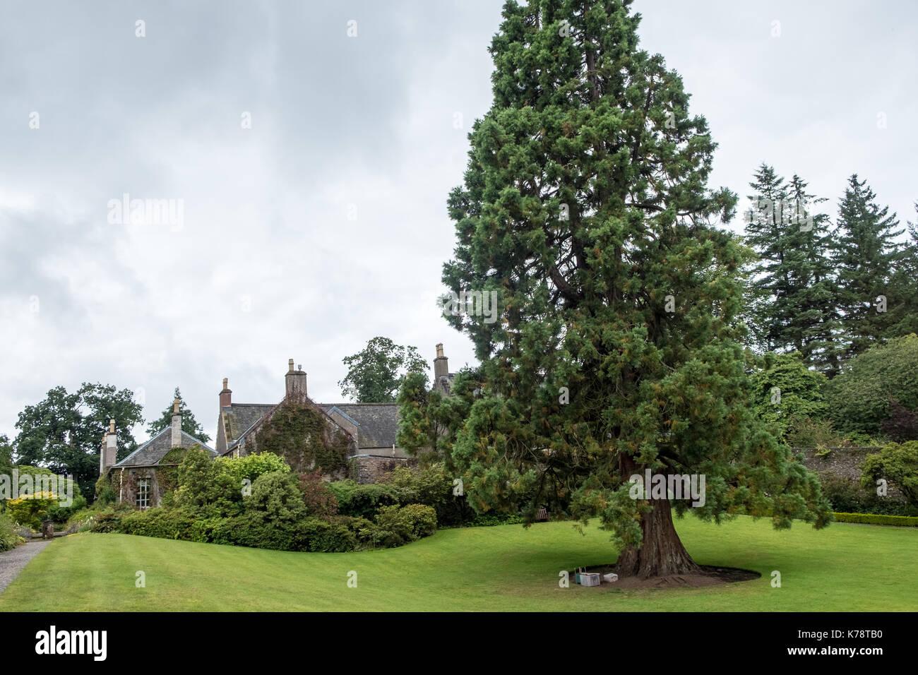 Geilston garden stock photos geilston garden stock for Garden trees scotland