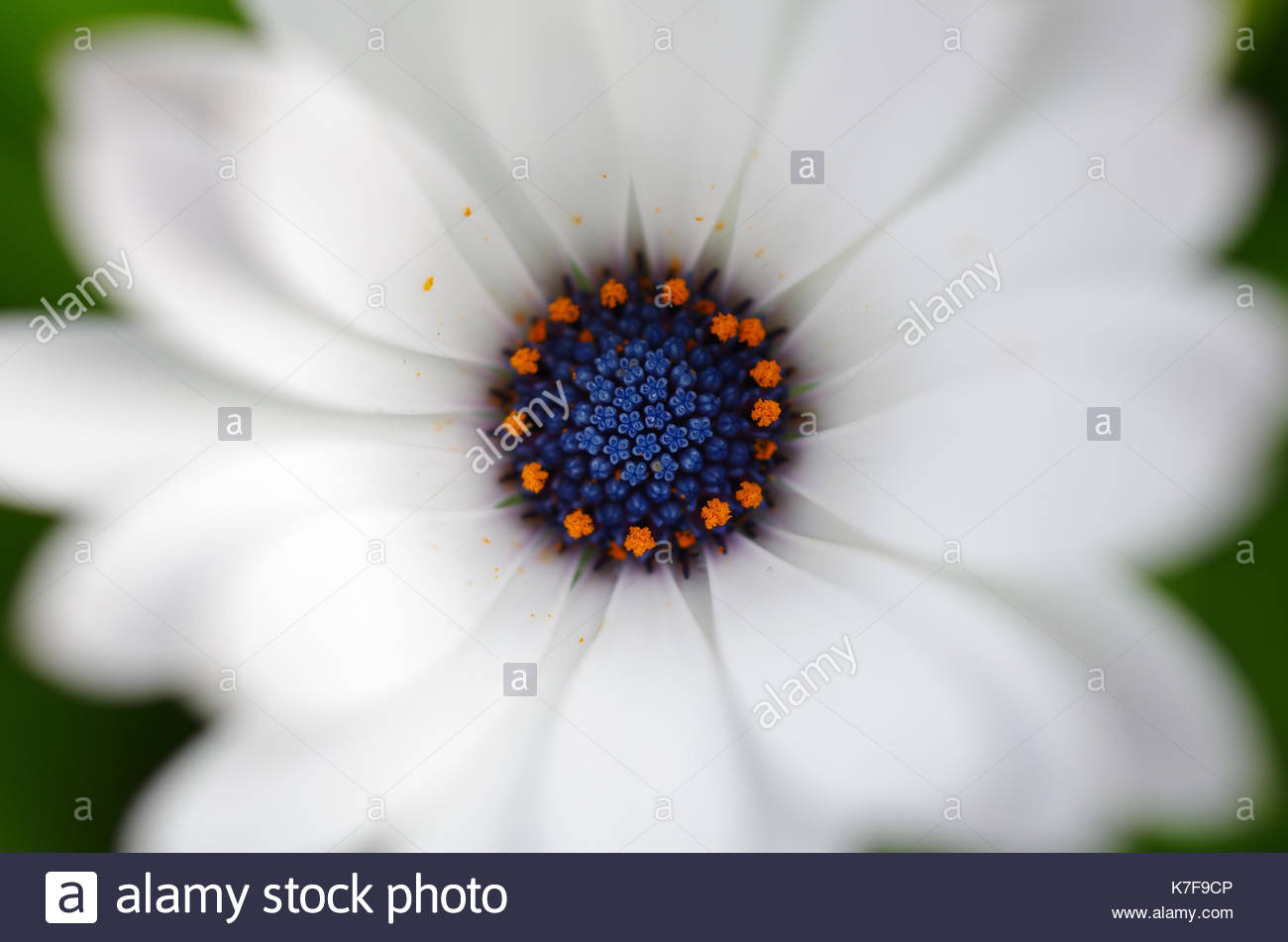 Center of a flower looks like a small universe stock photo center of a flower looks like a small universe izmirmasajfo