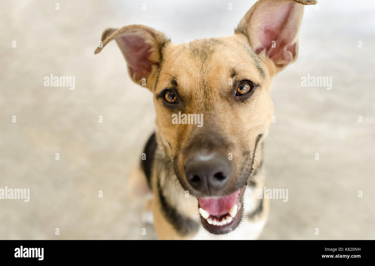 Dog Looking Right Stock Photos Dog Looking Right Stock Images - Dogs looking funny with toys