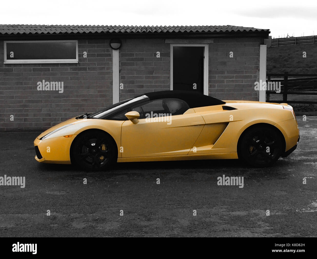 Lamborghini Gallardo In Yellow With A Black U0026 White Background