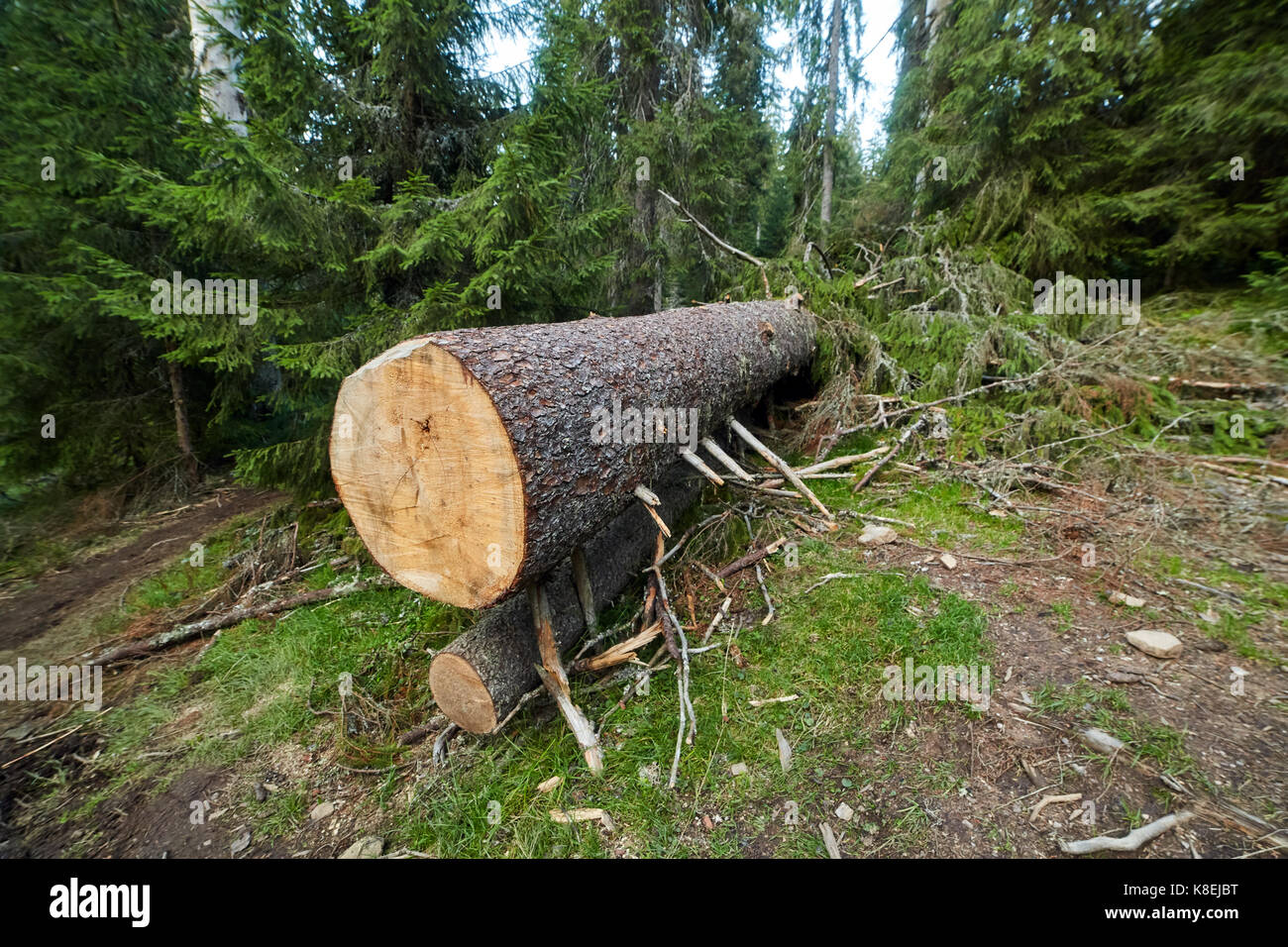 how to cut down trees in the forest game