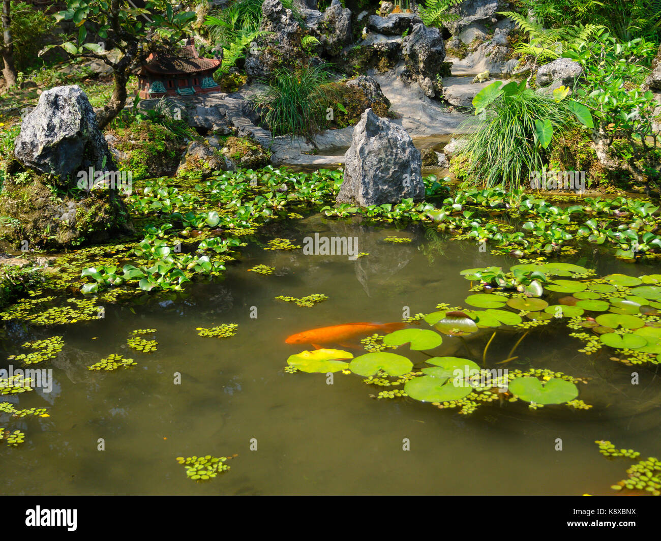 Overstocked stock photos overstocked stock images alamy for Artificial koi fish for ponds