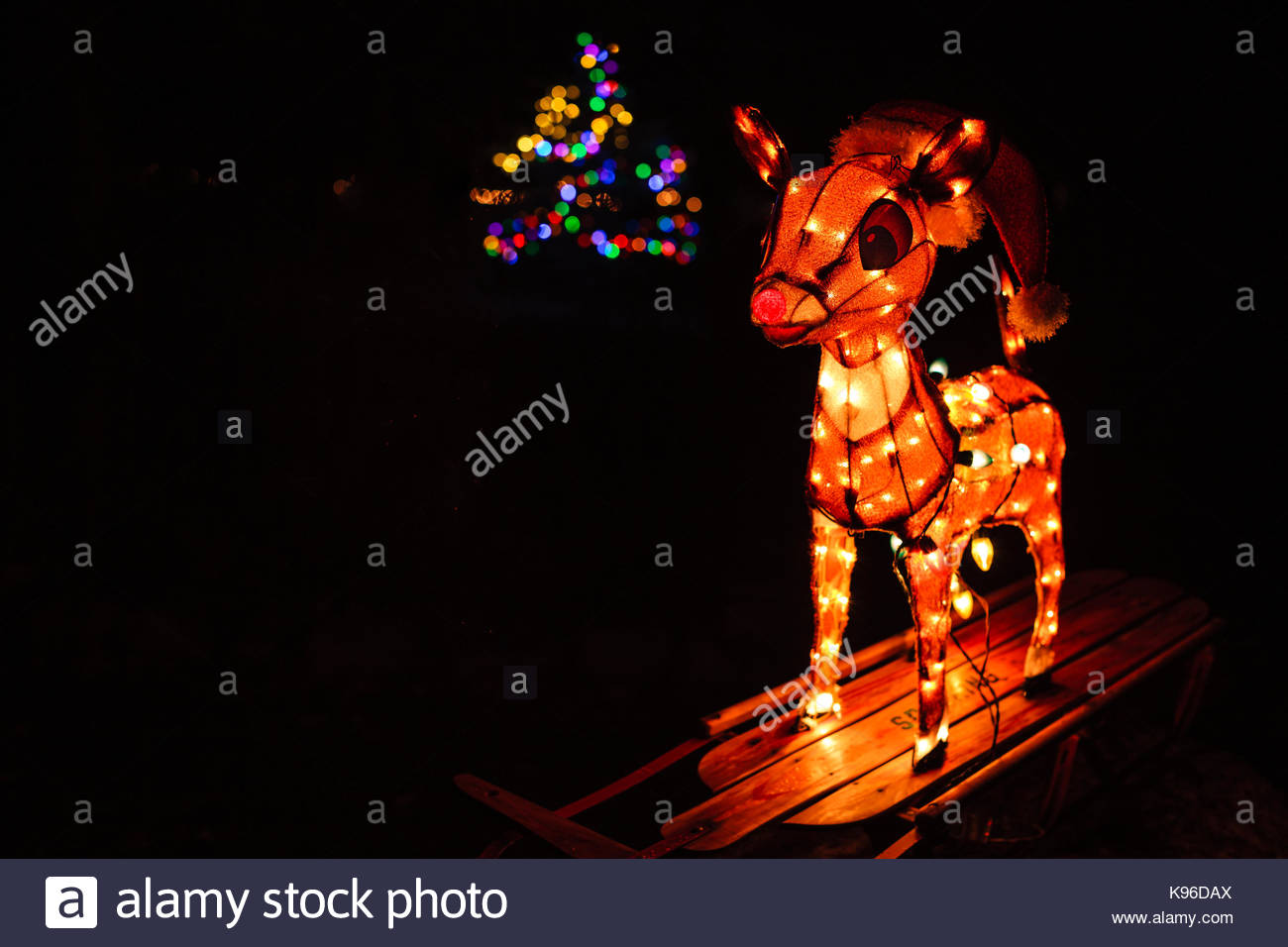 christmas decorations on the yard rudolph the red nosed reindeer and a lighted christmas tree in the background