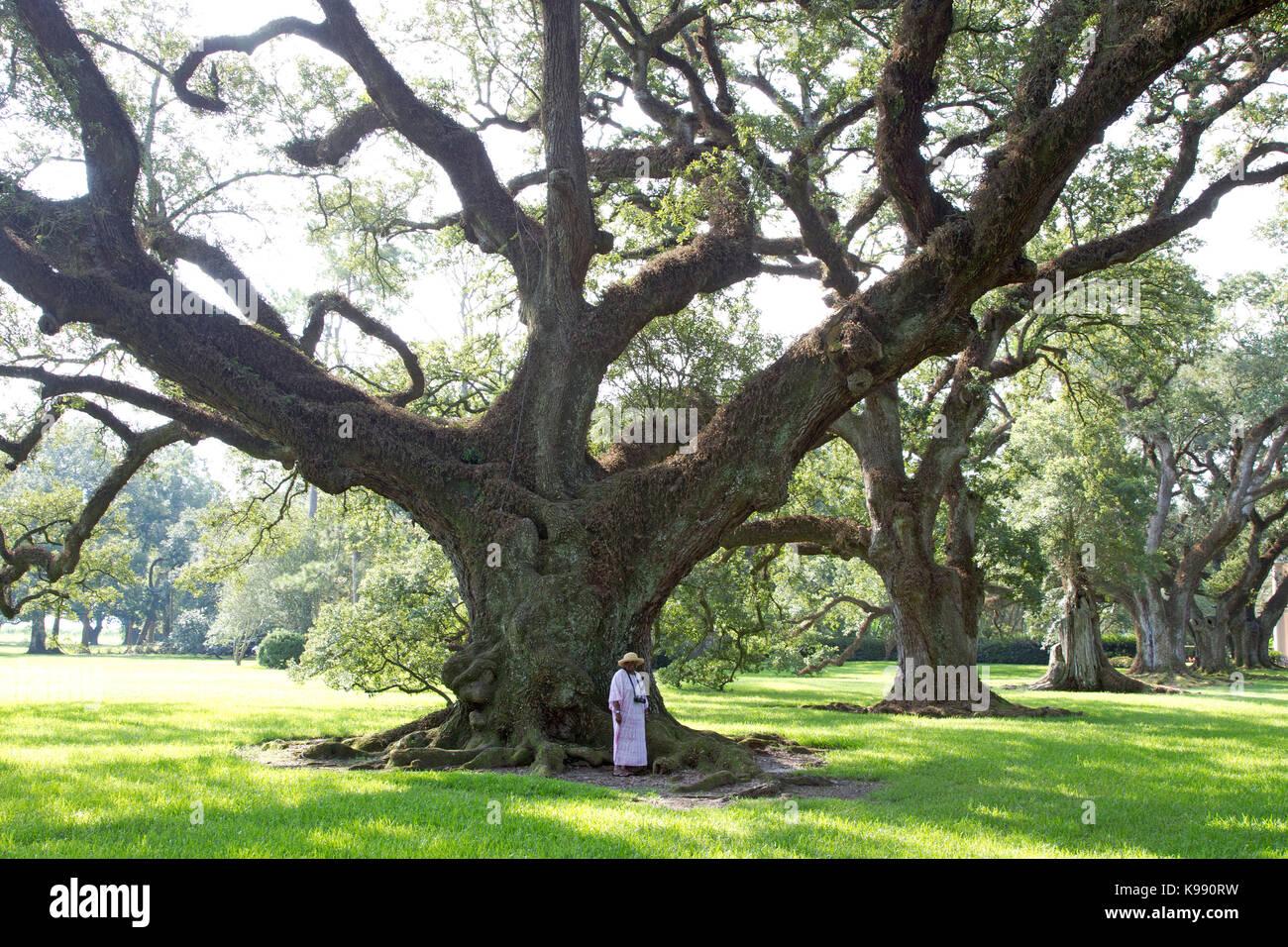 live oak cougar women Live oak brand 4,861 likes 28 talking about this southern lifestyle apparel ph: 410-633-0309/ 1-800-899-8337.
