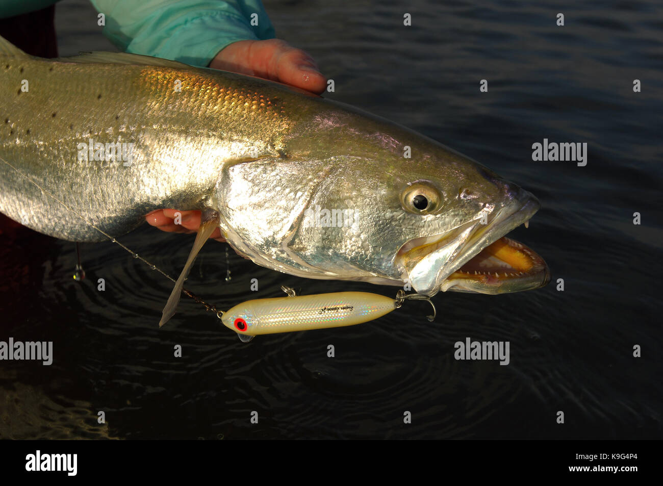 Seatrout fishing stock photos seatrout fishing stock for K9 fishing line