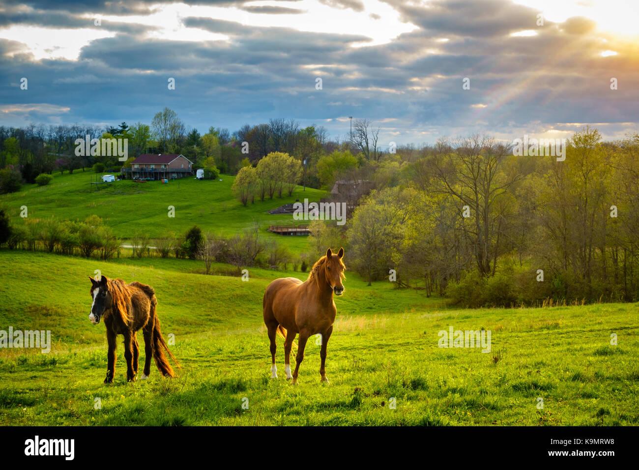 Chestnut Horses Stock Photos & Chestnut Horses Stock ... - photo#16