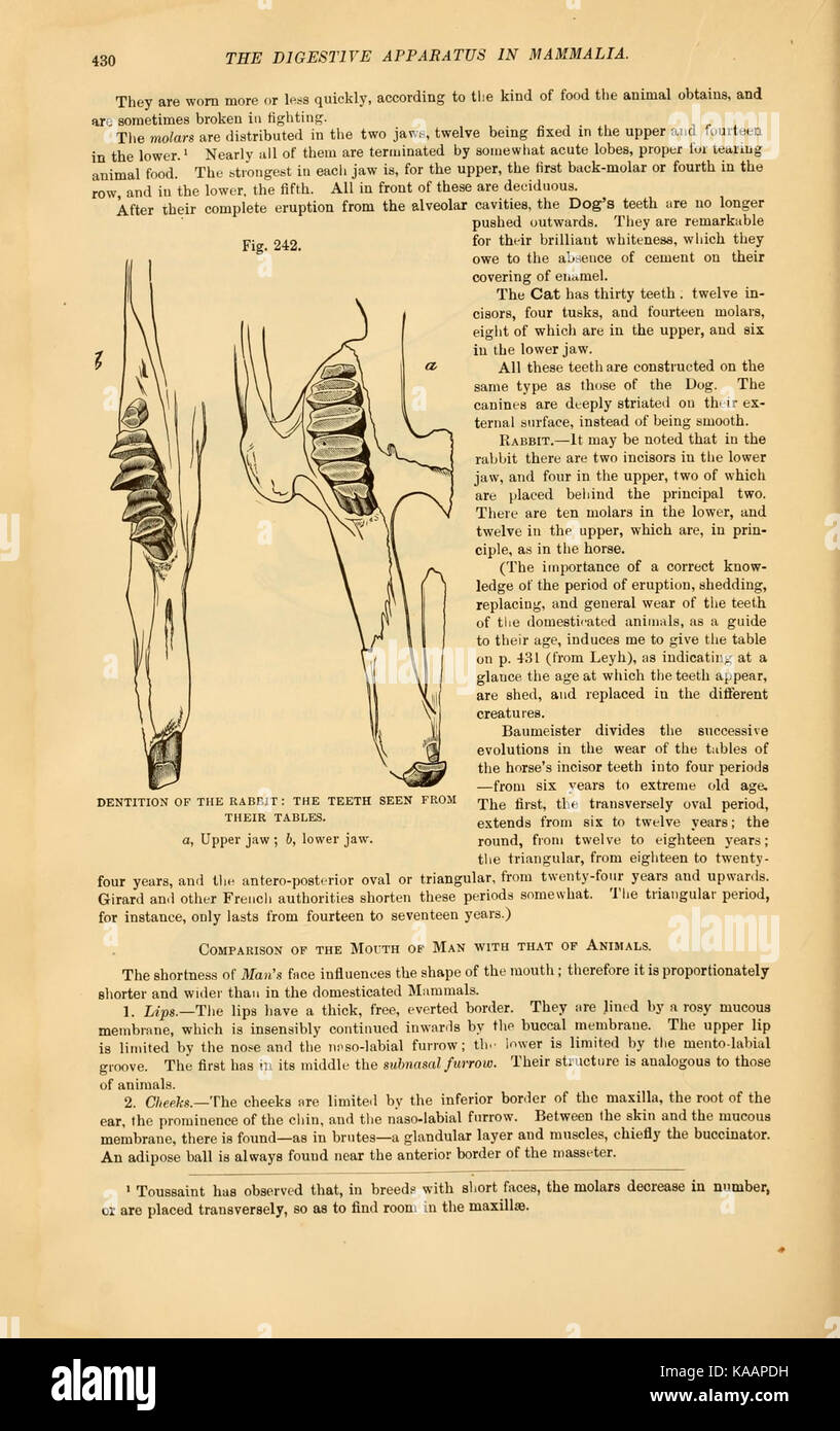 The comparative anatomy of the domesticated animals (Page 430 Stock ...