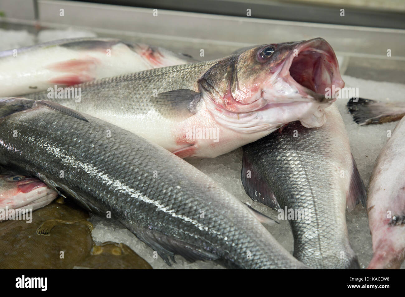 We have in stock frozen salted minnows year round - Silver Coloured Fresh Fish For Sale In A Market At Vilamoura Portugal Stock