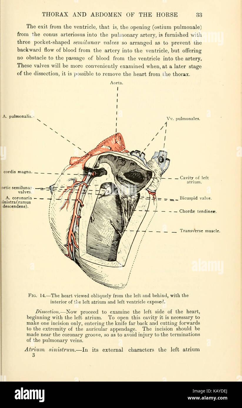 Horse mouth anatomy
