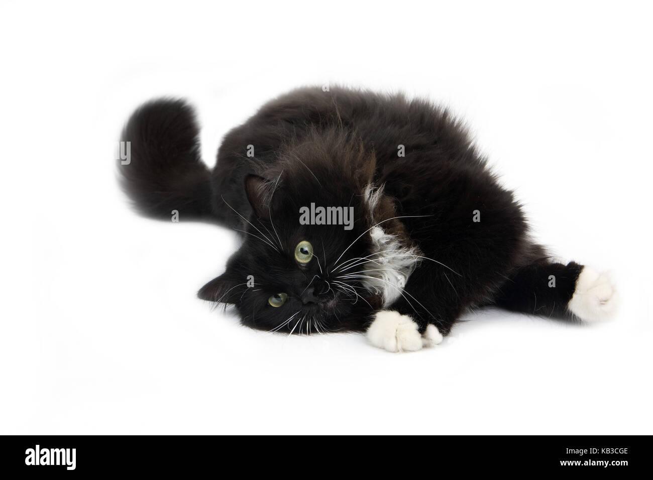 cat 6 max length