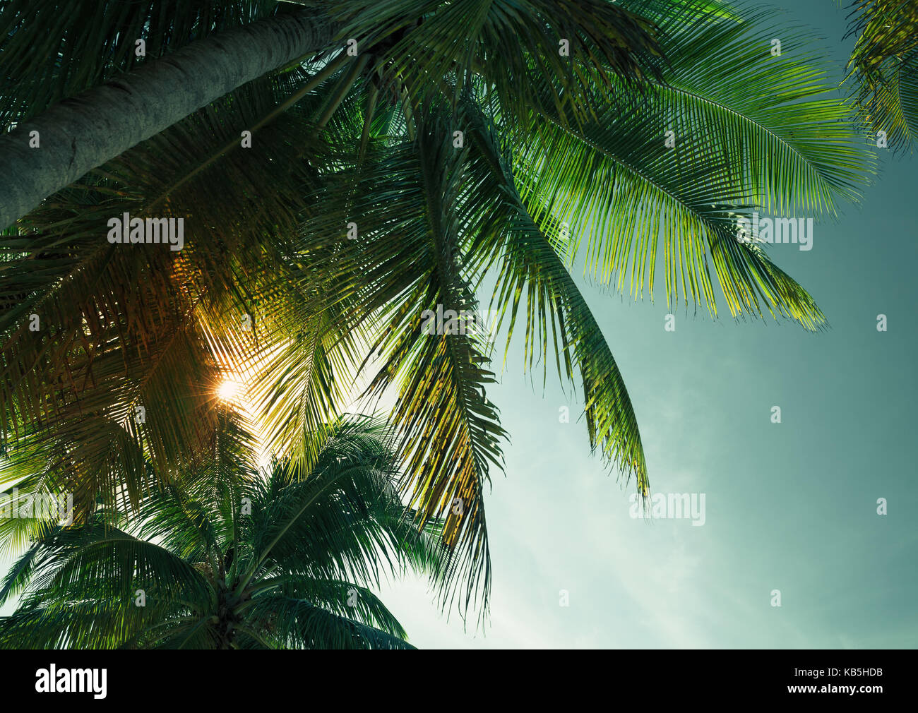 Palm trees leaves silhouette under tropical evening sky background ...