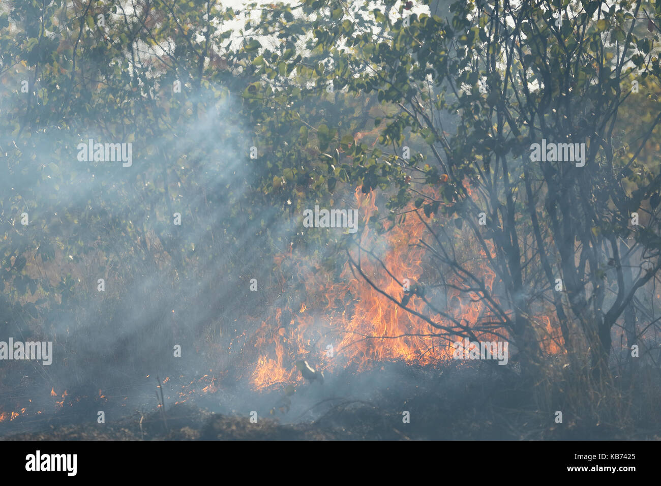 Grassland Fires Stock Photos & Grassland Fires Stock ...