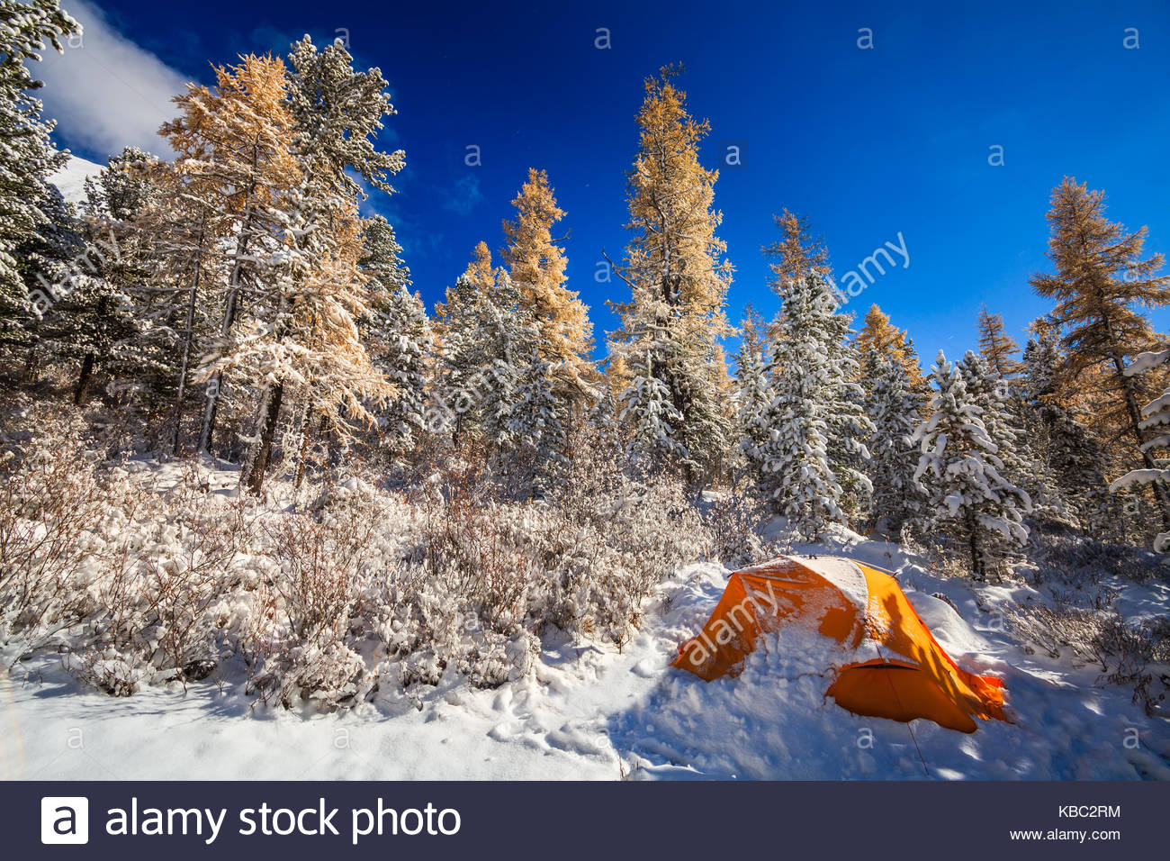 Orange tent in winter forest. Tourist c& in snowy forest & Orange tent in winter forest. Tourist camp in snowy forest Stock ...