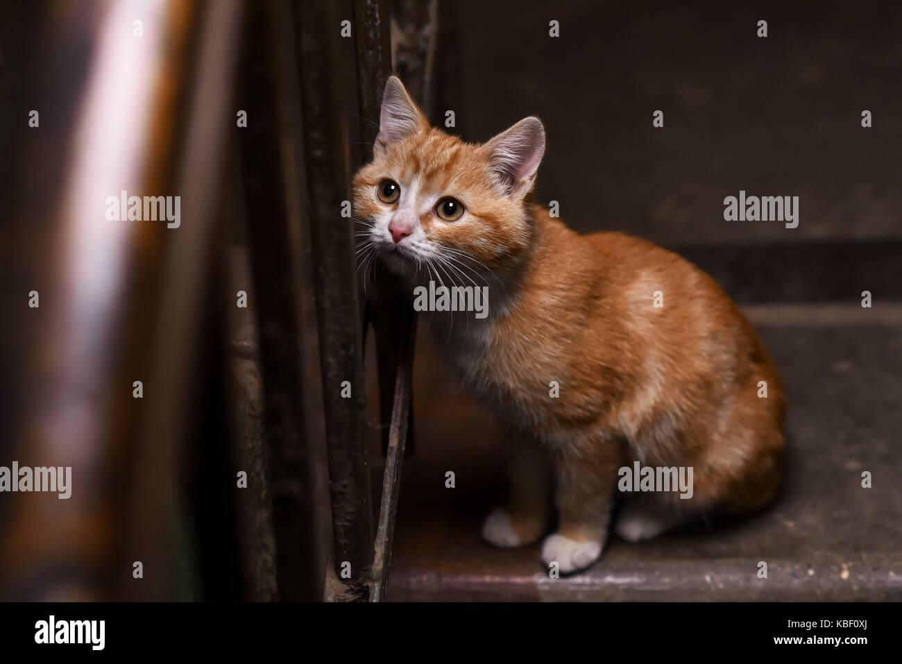 cat ladder stock photos u0026 cat ladder stock images alamy