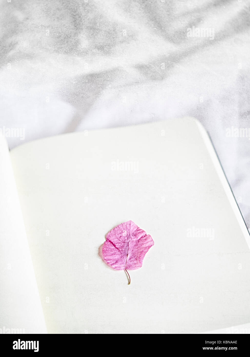 Pressed Flower In A Note Book Stock Photo 162123654 Alamy