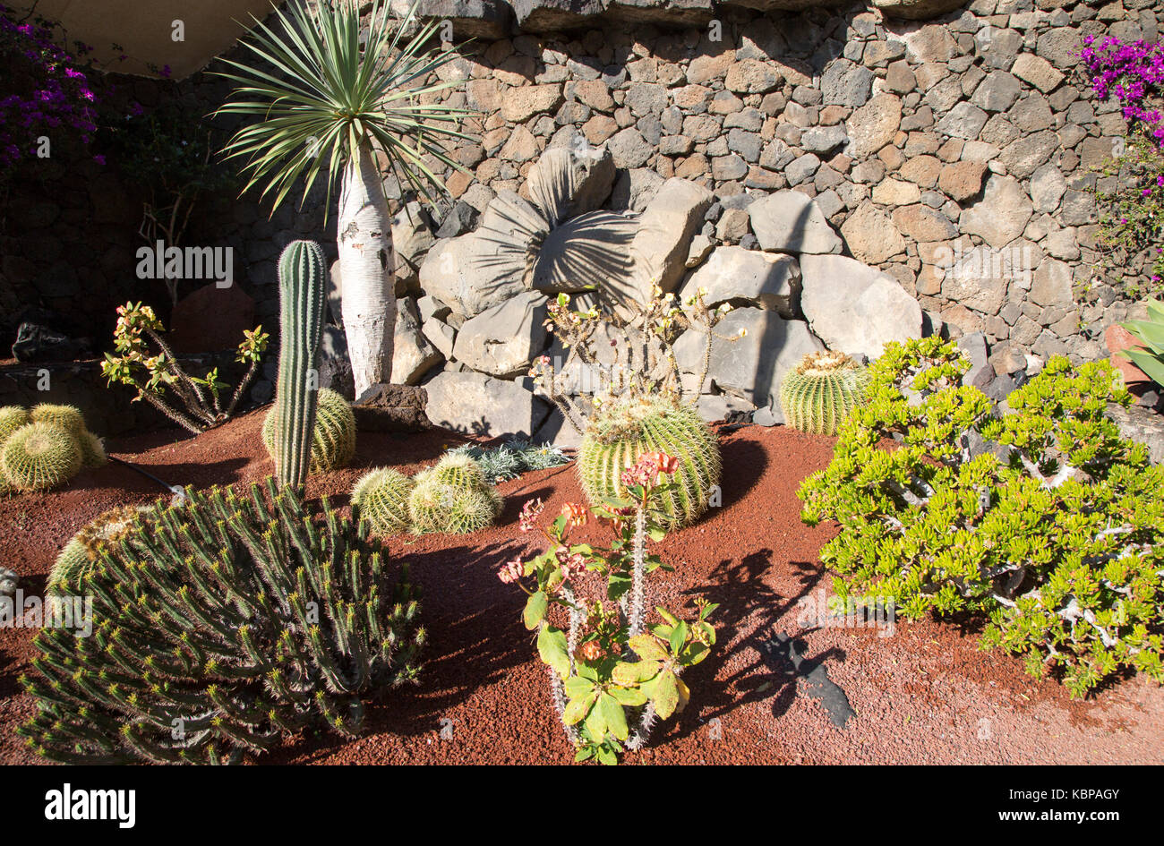 Small Cacti Garden With Different Varieties Of Cactus Lanzarote Canary  Islands Spain