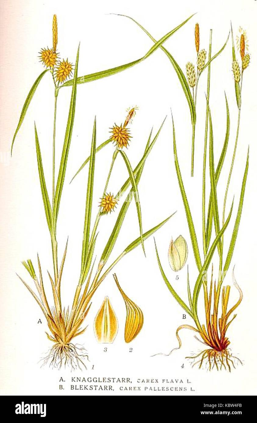 Fantastisch Carex Bronze Reflection Fotos - Innenarchitektur ...