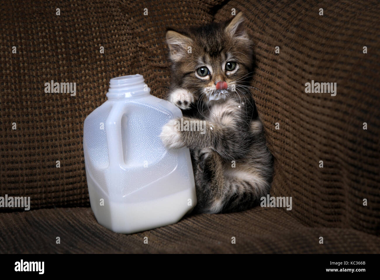 hang in there cat poster original