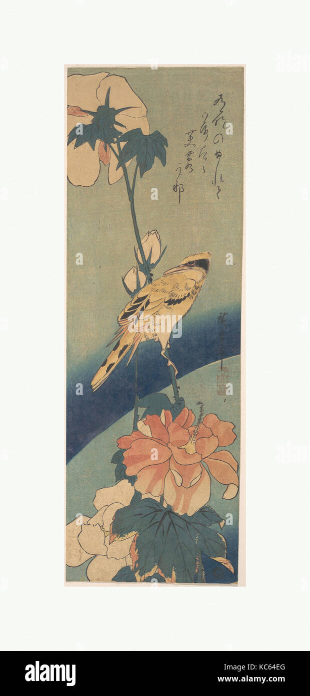 black naped oriole perched on a stem of rose mallow 歌川広重画 芙蓉