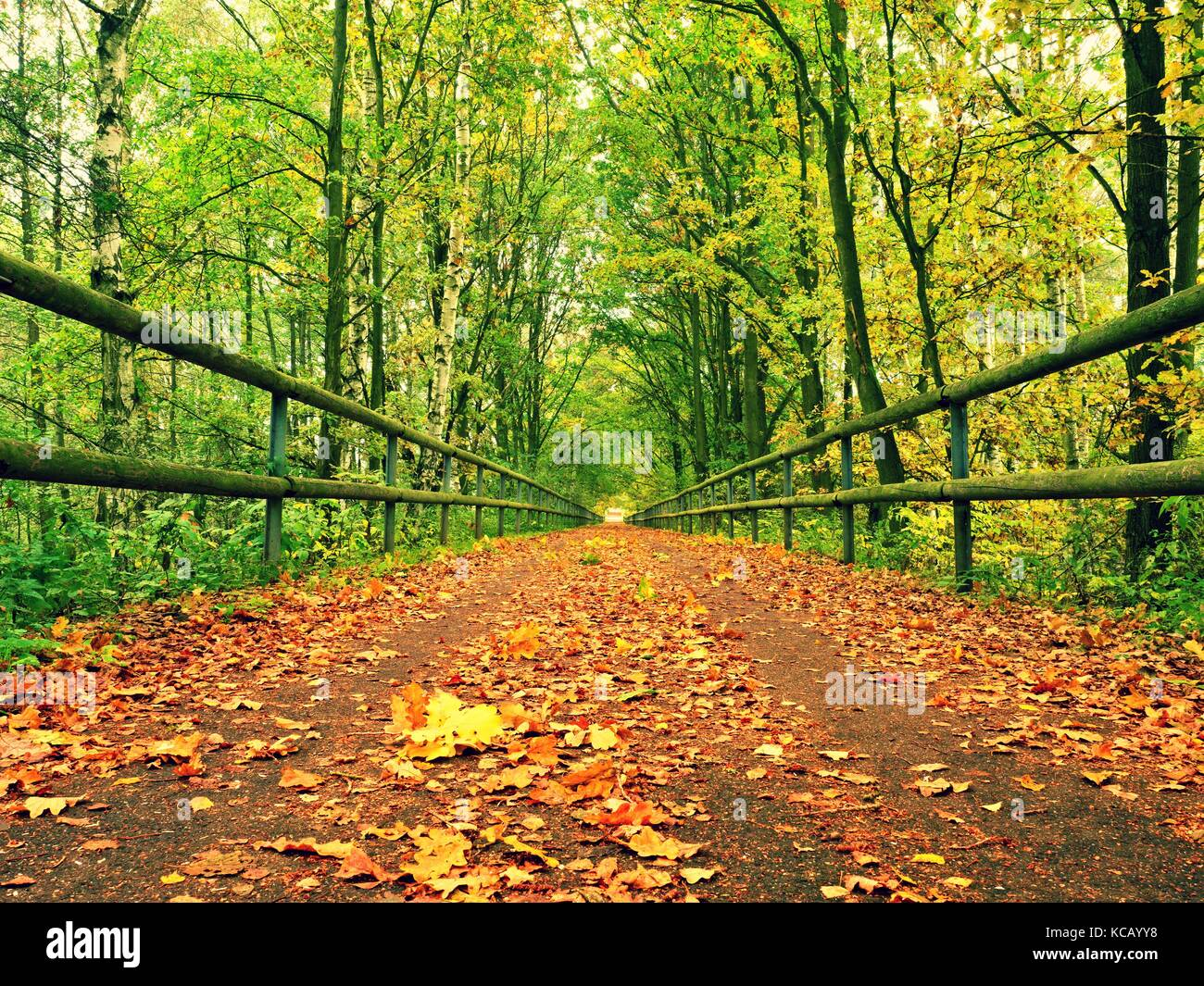 Forest path bellow green yellow trees. Fall afternoon in forest ...