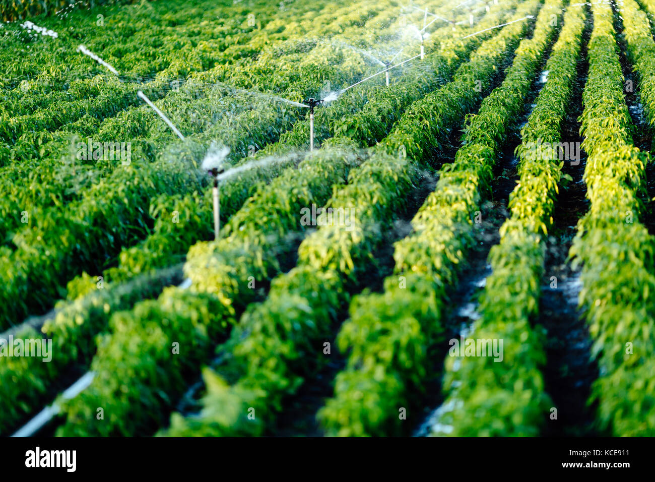 Drip irrigation images
