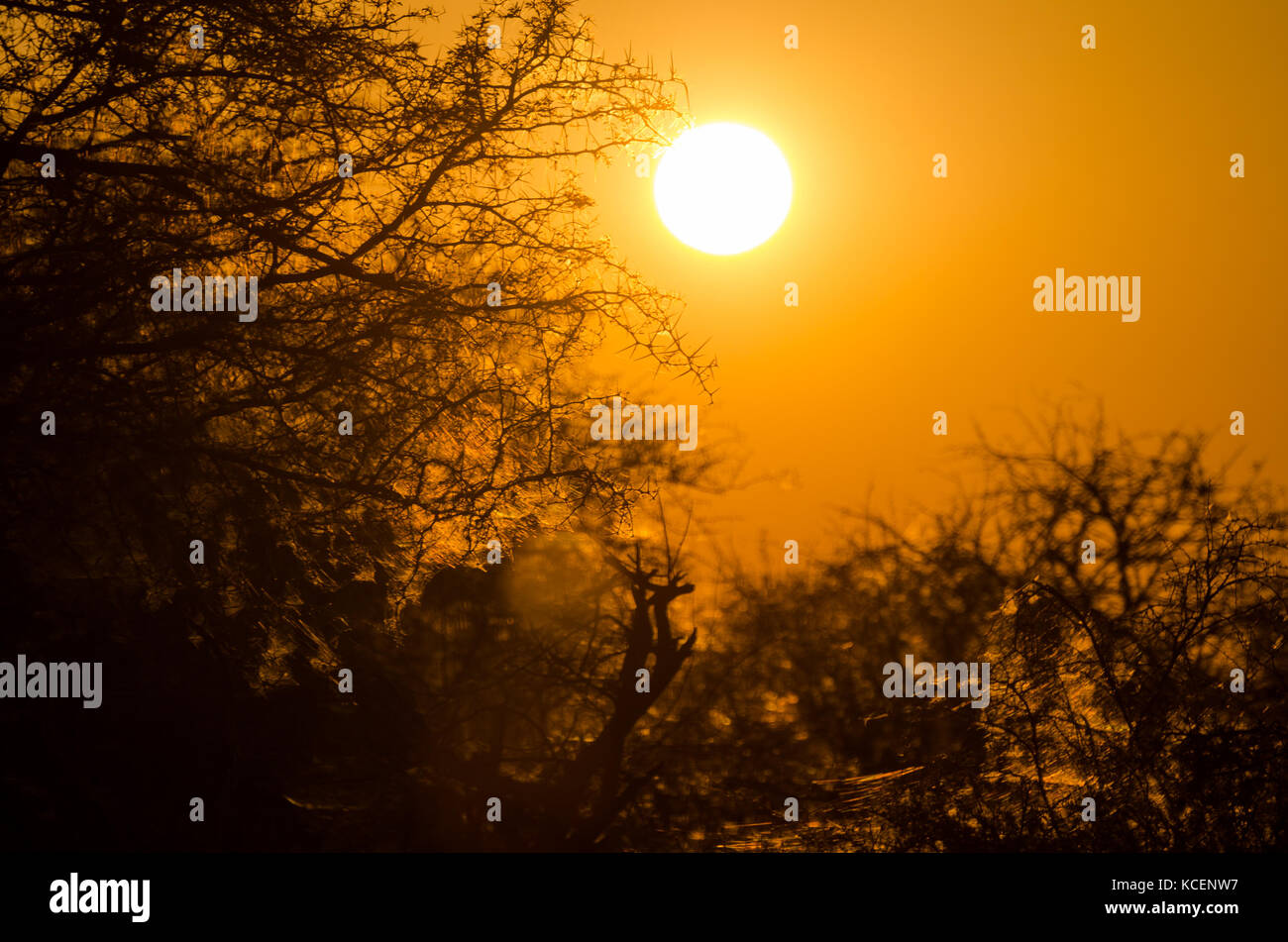 thorny trees stock photos amp thorny trees stock images alamy