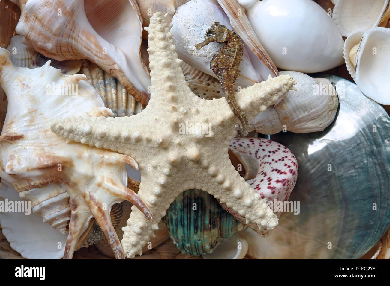background of assorted seashells starfish and seahorse stock