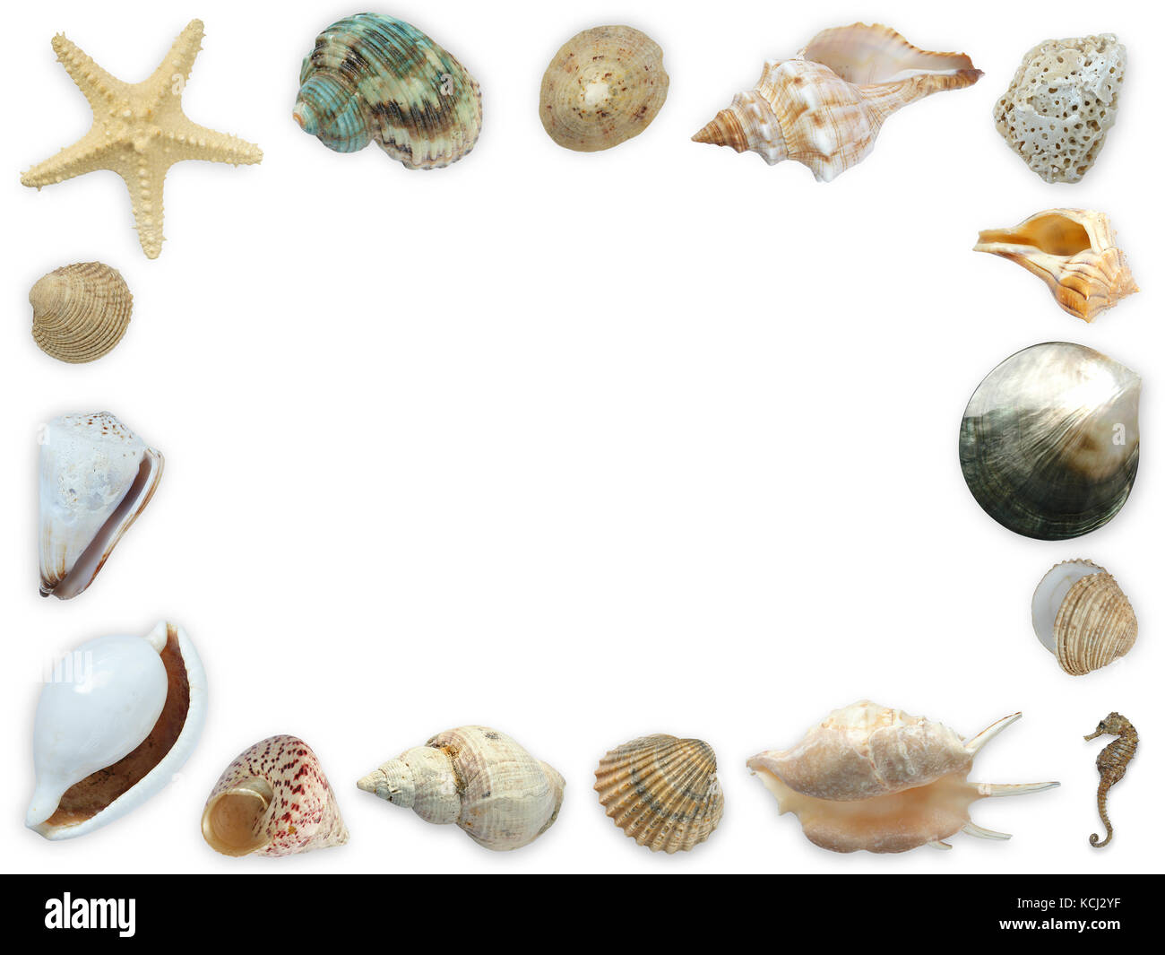 framework of assorted seashells starfish and seahorse with