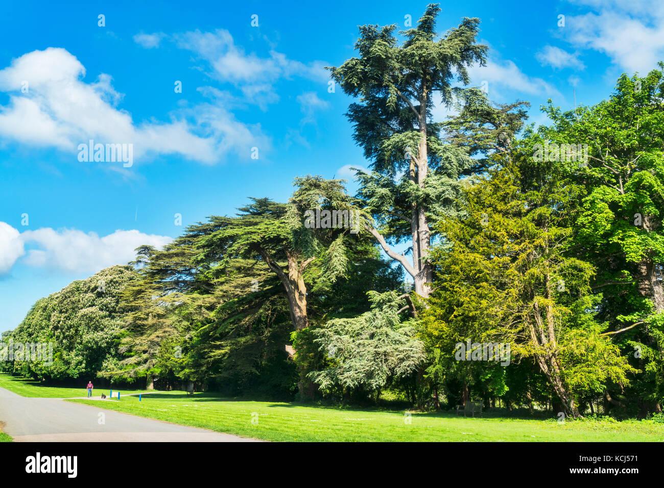 Cirencester park specimen trees gloucestershire uk for Specimen trees