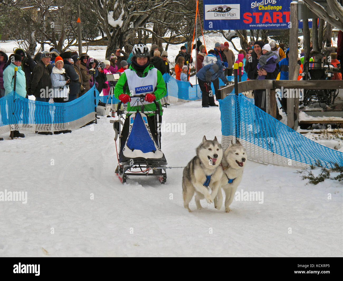 Single Dog Sled Snow Stock Photos & Single Dog Sled Snow ...