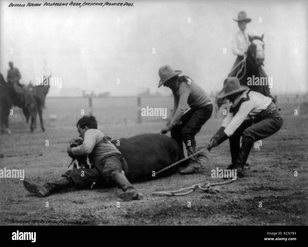 Bulldogging Stock Photos Amp Bulldogging Stock Images Alamy