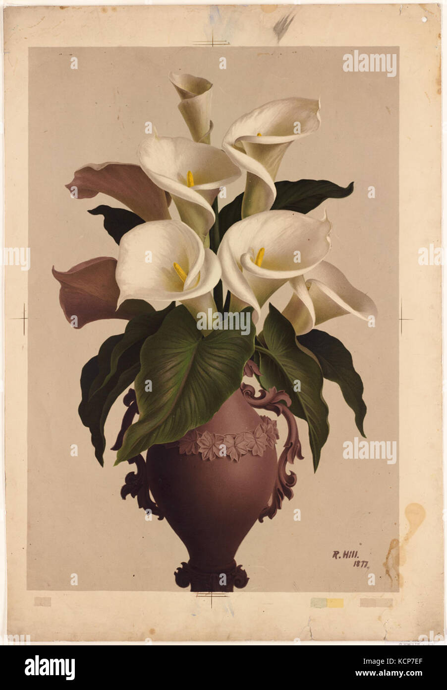 Calla lilies in vase stock photos calla lilies in vase stock calla lilies in vase by boston public library stock image reviewsmspy