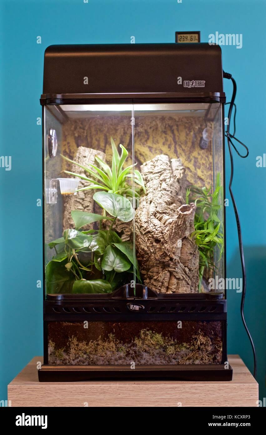 how to make crested gecko vivarium
