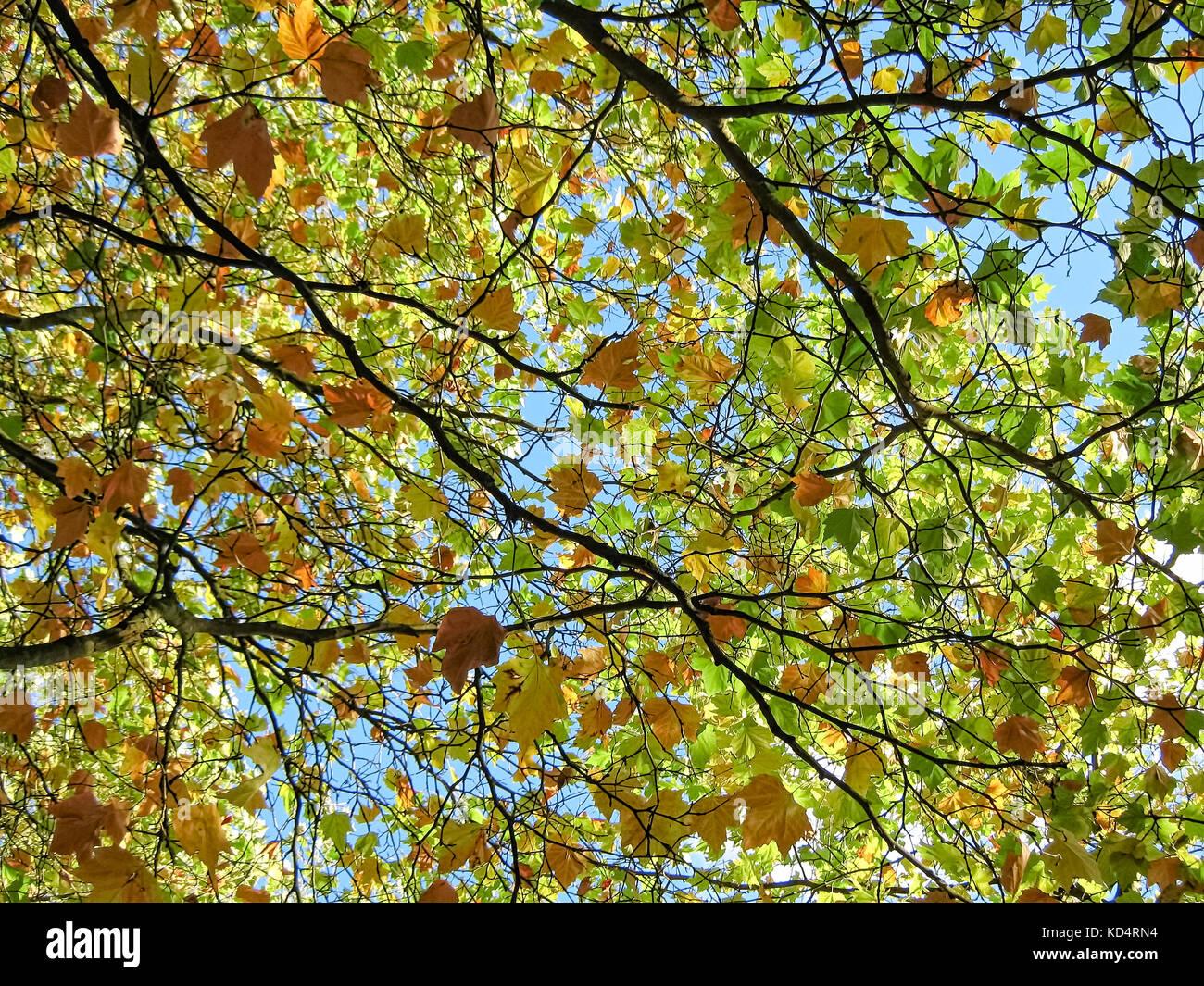 Screen Saver Stock Photos Amp Screen Saver Stock Images Alamy
