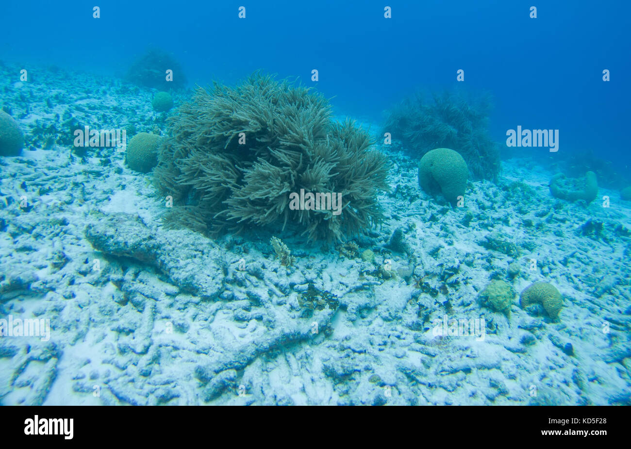 Caribbean Sea Animal Life: Deep Sea Animals Stock Photos & Deep Sea Animals Stock