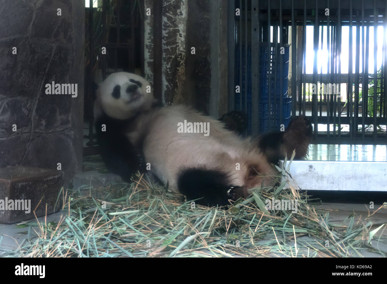 the study of a panda Who is eligible to participate  how this study works mycircadianclock is a user-friendly app which tracks your daily eating,.