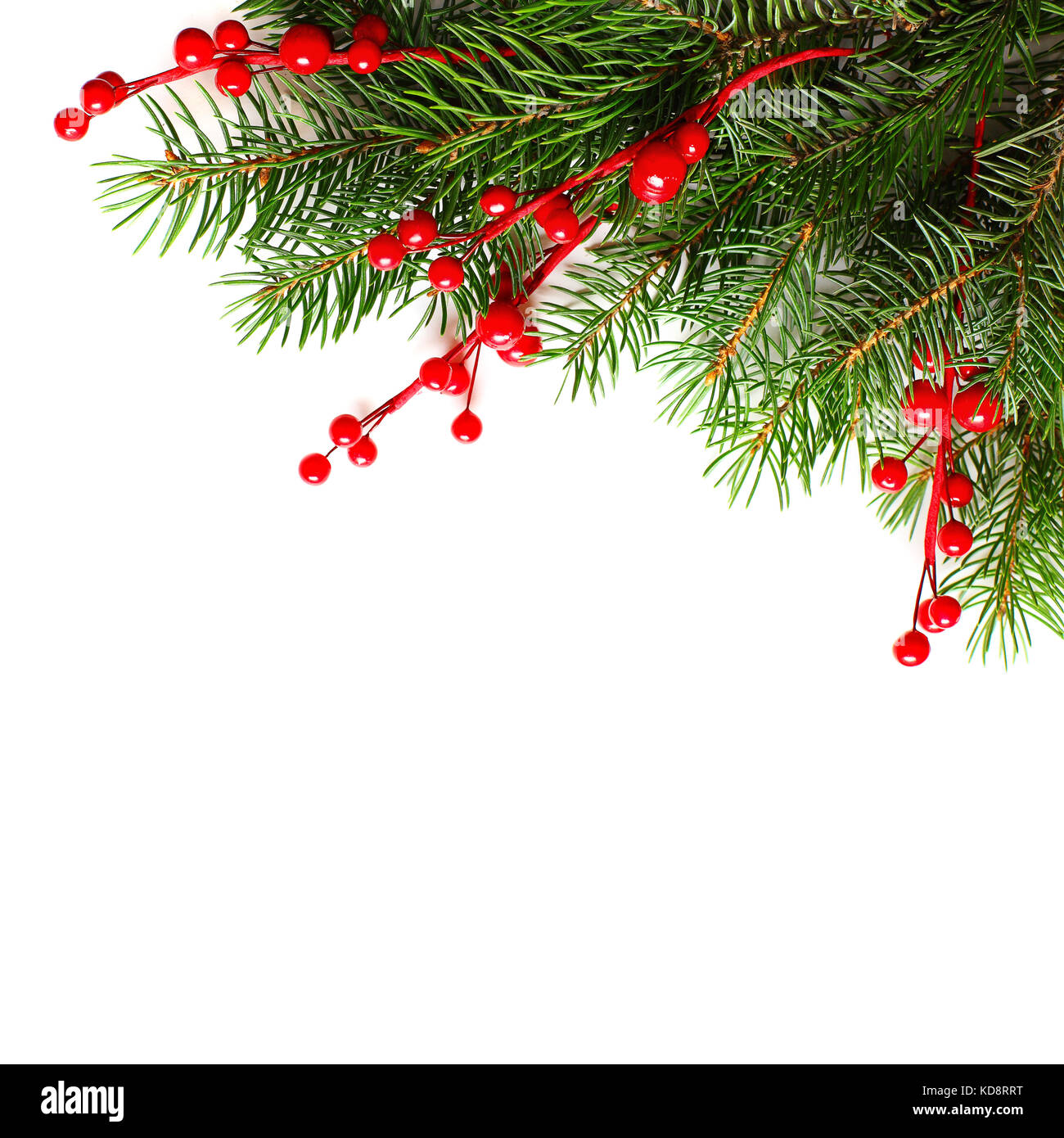 christmas background with xmas tree twig and red berries abstract christmas or new year border for xmas card on white background