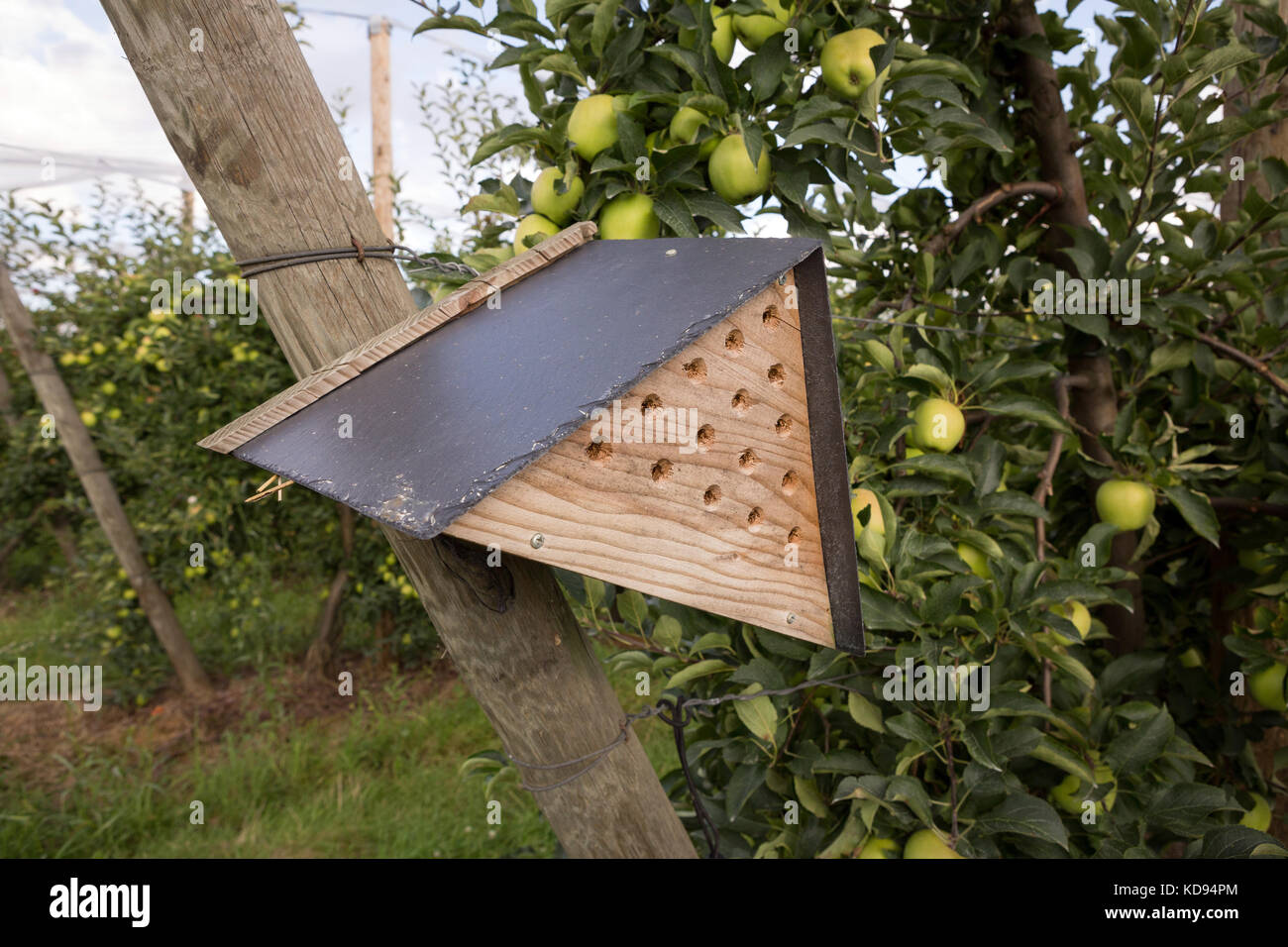 A Mason Bee House In An Organic Apple Orchard To Stimulate Pollination