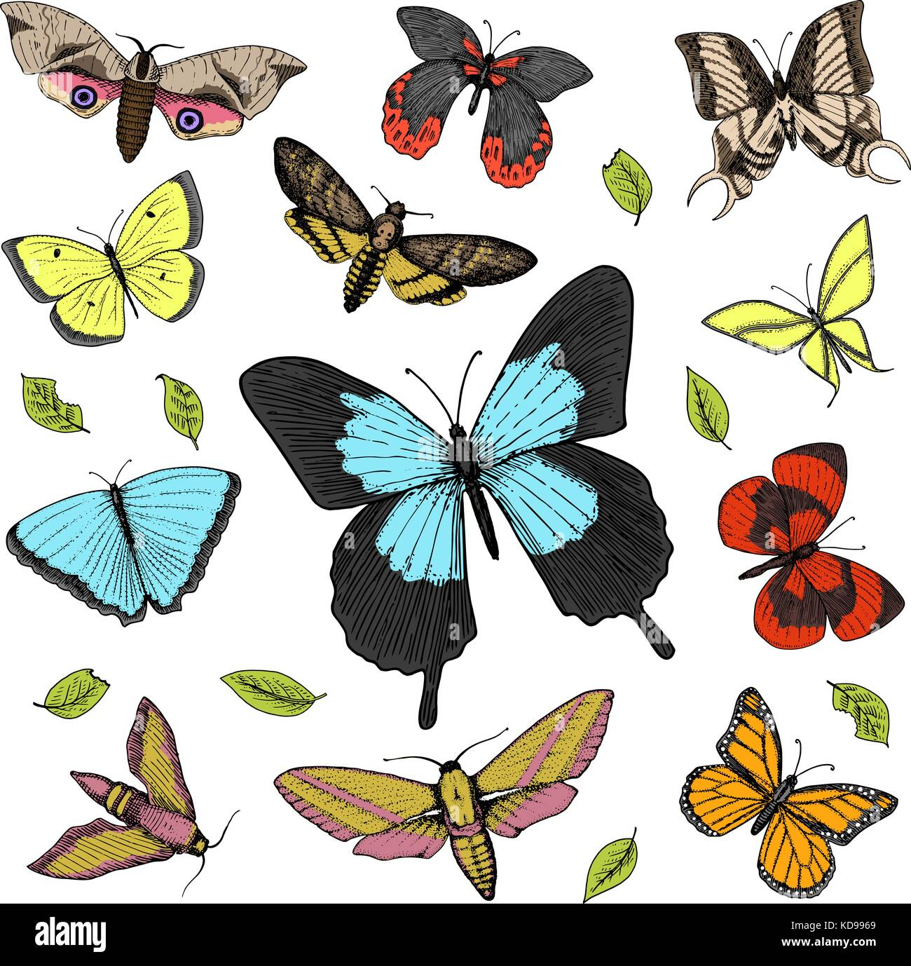 Tattoo or boho t shirt or scrapbooking design mystical esoteric tattoo or boho t shirt or scrapbooking design mystical esoteric symbol of freedom and travel butterfly or insect sketch entomological collection biocorpaavc Images