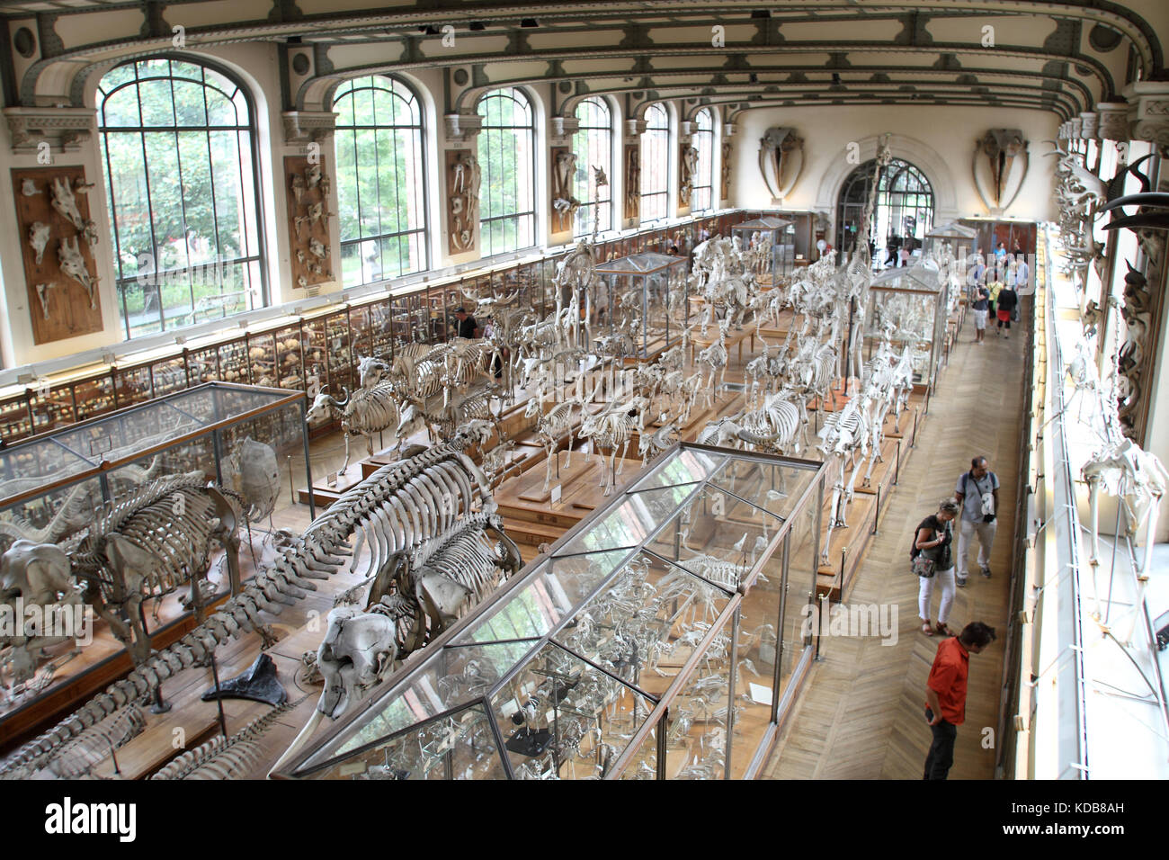 The Gallery Of Paleontology And Comparative Anatomy Paris Stock