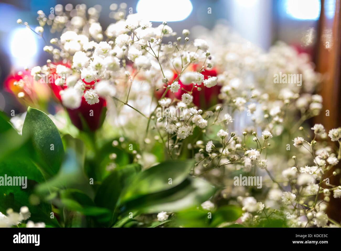 White gypsophila babies breath Bristol Fairy flowers close up in a ...